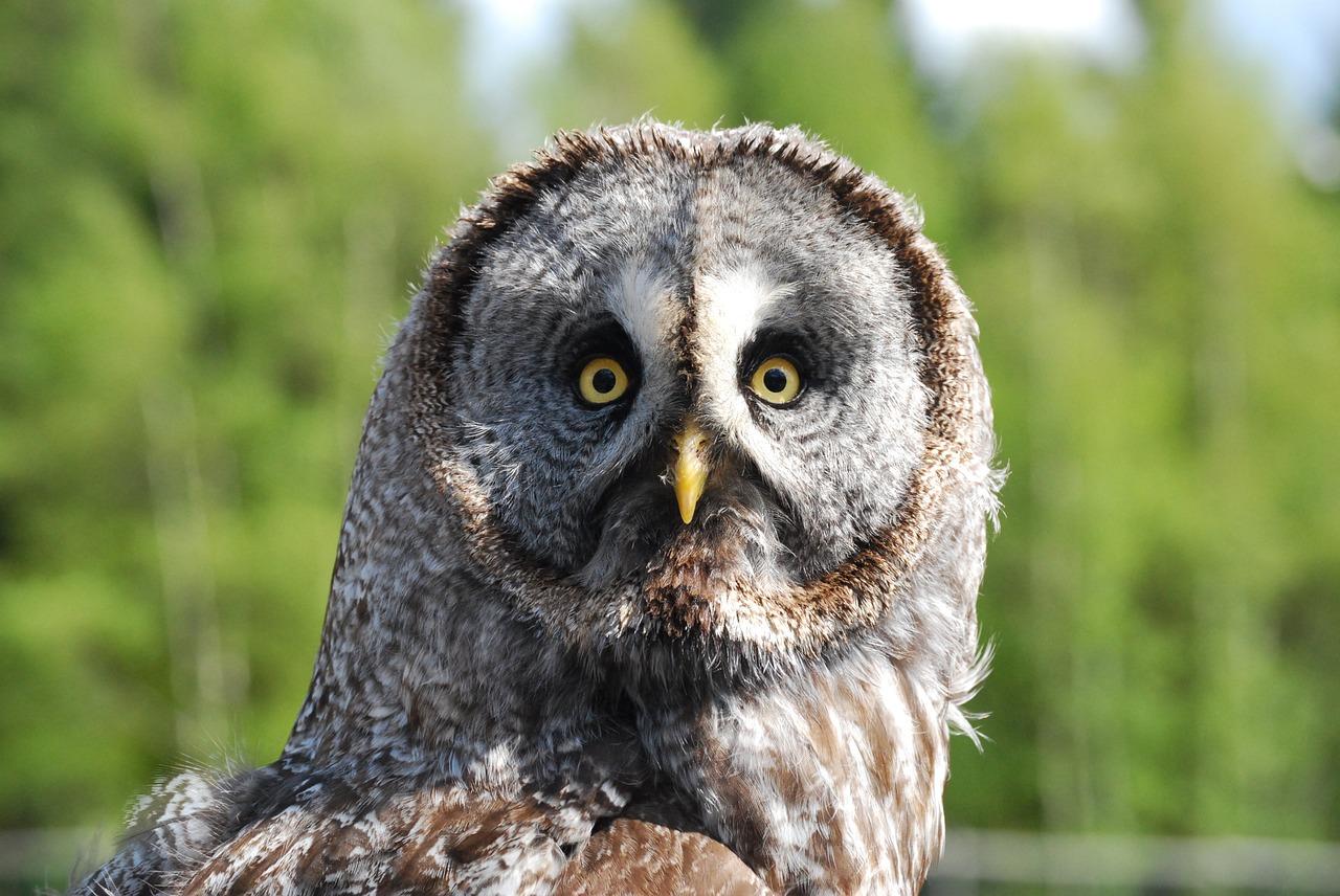 フクロウの顔の写真